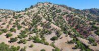 Deforestación de los bosques de argán en marruecos