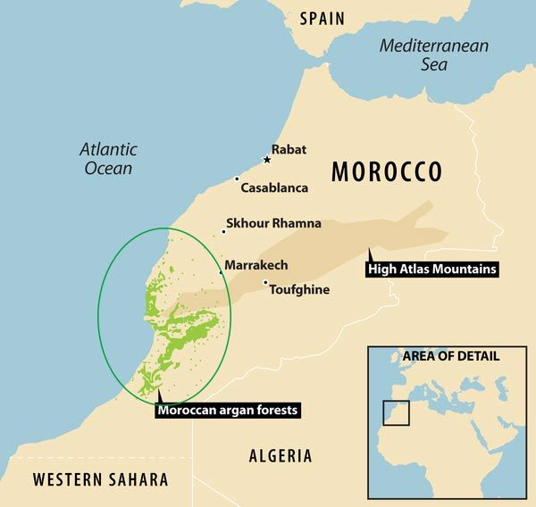 Localización de los bosques de argán en maruuecos